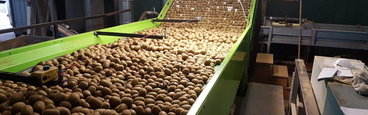Fruit handling   Fraser Gear   Te Puke, New Zealand